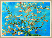 Almond Branches in Bloom San Remy