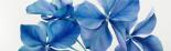 Shiny Bleu