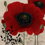 Red poppies I - Linda Wood