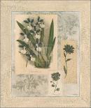 Histoire Du Orchid VI