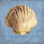 Oceanum Shells Blue V
