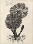 Thornton Succulents II