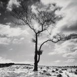 Lone Tree # 2, Peak District England