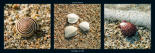 Coquillages sur sable