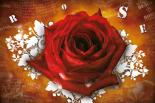 Rose Lyrics