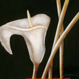 Lily in sepia I - Beate Emanuel
