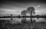 Brother Sister tree - Ivo  Sneeuw