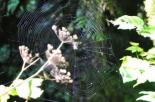 Spiderweb I
