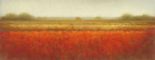 Field of poppies - Hans Dolieslager