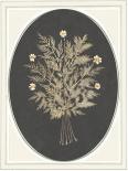 Gardenio I