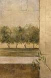 Olive Groves II