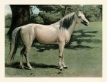 Cassells Horse I