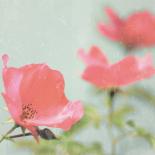 Botanical Romance