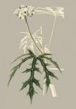 Botanical Cabinet V