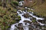 Stream Falls VI