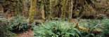 Rain forest, Pacific Rim, Vancouver