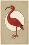 Red Ibis - Anne Waltz