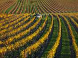 Veineyards of hautes côtes Burgundy