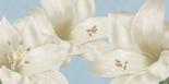 White Amaryllis III - Wood Linda