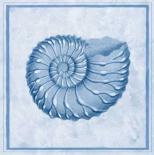 Blue Nautilus C