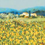 Lemon Grove, Tuscany