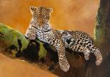 L�opard du Serengeti