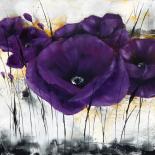 Pavot violet III