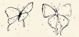 Butterfly Element I