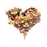 Butterfly heart - Teis Albers