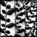 Leaves and Vines