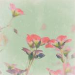 Romantic Meadow