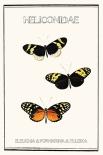 Heliconidae - Anne Waltz