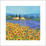 Lavender And Sunflowers, Provence