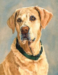 Lucy Yellow Lab