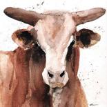 Splashed Bull