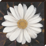 Migical white daisy