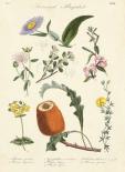 Botanical Register II