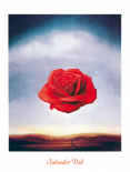 Rose meditative