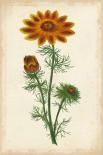 Vibrant Curtis Botanicals I
