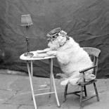 Chum (reading dog)