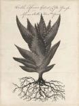 Thornton Succulents I