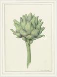 Classic veg - Anne Waltz