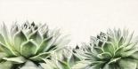 Soft Succulents I
