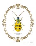 Adorning Coleoptera VII