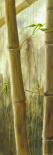 Rainforest III