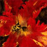 Rosso Fiore II