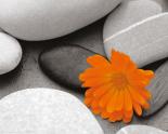 Pebbles Marigold