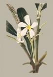 Botanical Cabinet IV