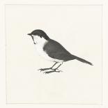 Birdy II - Anne Waltz