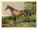 Cassells Horse IV